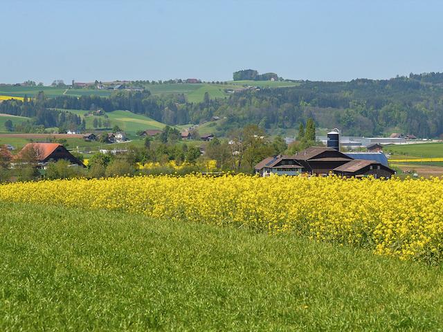 スイスと日本における水際対策について